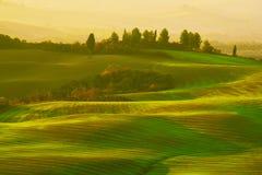 Wavy fields in Tuscany Royalty Free Stock Image