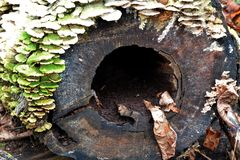 Fungi on rotting log Stock Photography