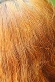 Wavy gold hairs of a beautiful women Stock Photography