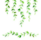 Wavy green branches Stock Photos