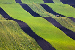 Wavy green fields.  Striped rolling sunny hills at sunset Stock Photography
