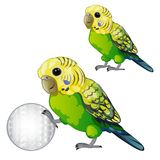 Wavy green parrot or budgerigar isolated on white background. Tropical domesticated bird rolls the ball. Animated vector. Illustration stock illustration