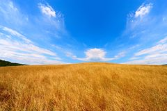 Wavy Hills. Of Tuscany Under Blue Cloudy Sky Stock Images