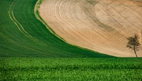 Wavy landscape in Central Bohemia. Contrast of color areas of fields and curled landscapes. Fields cultivated with an agricultural machine stock images