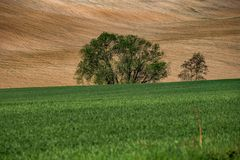 Wavy landscape with trees in Central Bohemia royalty free stock images