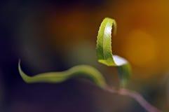 Wavy leaf Royaltyfri Bild