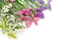 Wavy leaf sea lavender flowers Royalty Free Stock Images