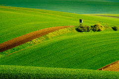 Wavy meadows spring landscape in South Moravia Stock Images