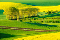 Wavy meadows spring landscape in South Moravia Stock Image