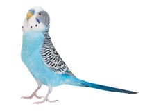 Wavy parrot Stock Photography