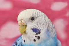 Wavy parrot girl Stock Photo