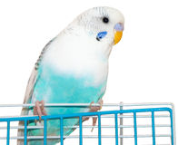 Wavy parrot Royalty Free Stock Images