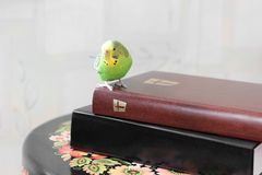 The wavy parrot sits on the Bible.  royalty free stock images