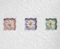 Wavy Pastel Daisies. Three wavy artificial daisy flowers on a white background Stock Images