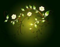 Wavy pattern of beautiful green flowers on a dark base. EPS10  illustration Stock Image