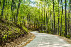 Wavy road in forest Royalty Free Stock Image