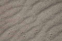 Wavy sand with bird footprints Royalty Free Stock Photo