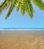 Wavy sandy beach at low tide with palm tree