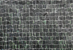 Wavy texture. Background or texture like crocodile like with green nuances Royalty Free Stock Photo