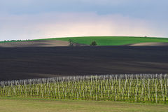 Wavy vineyard fields in the evening on South Moravia. Czech Republic stock images
