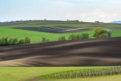 Wavy vineyard fields in the evening on South Moravia. Czech Republic stock photos