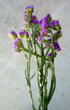 Wavyleaf sea-lavender, Limonium sinuatum Stock Photos