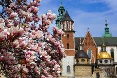 Wawel城堡在克拉科夫在春天 图库摄影