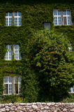 Wawel Castle overgrown with ivy. Stock Photo