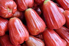 Wax Apple In Red Stock Photos