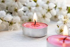 Wax candles are burning near the branches of flowering cherry on the table stock image