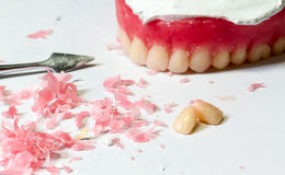 Wax dentures model Stock Photo