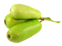 Wax gourd or Bottle Gourd Stock Images