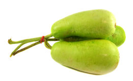 Wax gourd or Bottle Gourd Royalty Free Stock Images