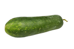 Wax gourd or Chalkumra of Indian subcontinent Royalty Free Stock Photo