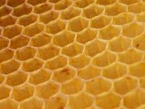Wax hexagonal bee honeycomb. Texture Stock Images