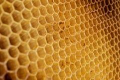 Wax hexagonal bee honeycomb. Texture Royalty Free Stock Photos