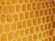 Wax hexagonal bee honeycomb. Texture Royalty Free Stock Photography