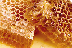 Wax honeycombs with honey Royalty Free Stock Photos