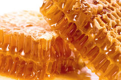 Wax honeycombs with honey Royalty Free Stock Image