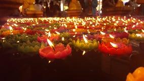 Wax lotus Stock Images