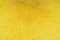 Wax. Made from old bees for the new bees Stock Image