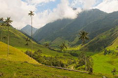 Wax palm trees of Cocora Valley, colombia Royalty Free Stock Photos