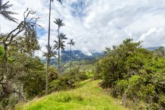 Ridgeline. Wax palms along a ridgeline in the mountains outside of Salento, Colombia stock photography