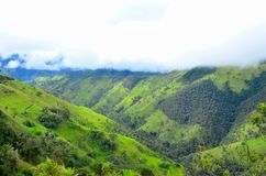 Wax Palms of Cocora Valley near Salento, Colombia. Forest patches of wax palms, Ceroxylon quindiuense line the valley under cloudy skies.  The national tree of royalty free stock photo