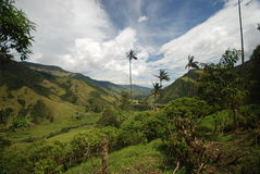 Wax palms and Colombian landscape Stock Image