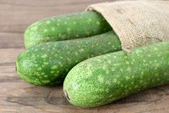Wax squash gourd Royalty Free Stock Image