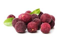 Waxberry или красный bayberry стоковые изображения rf