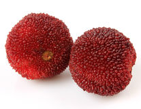 Waxberry или красный bayberry стоковые фото