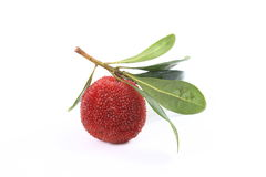Waxberry ( red bayberry ) Royalty Free Stock Images