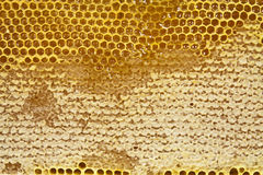 Waxed honeycomb with honey Royalty Free Stock Image